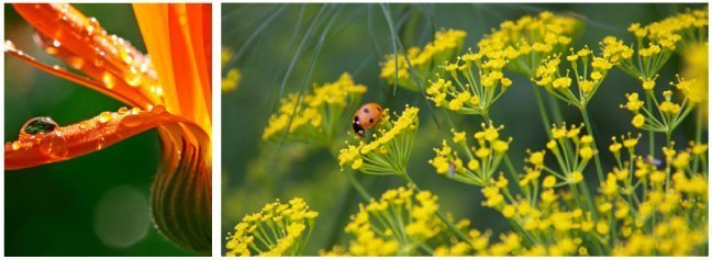 Flower and lady bug