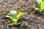 Seedling from Nourish